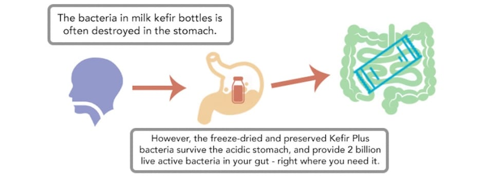 Kefir stomach infographic
